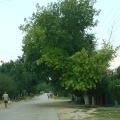Отдых в Тамани. На улицах станицы. Природа и климат Таманского края